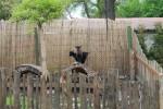 kozy bosen