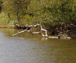 ropotamo reka