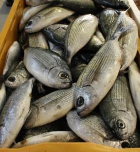 Akamas ryby