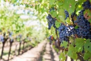 moravske vinarske stezky