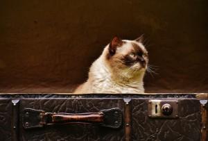 kocka v kufru