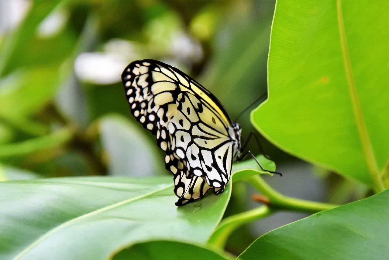 vystava motylu