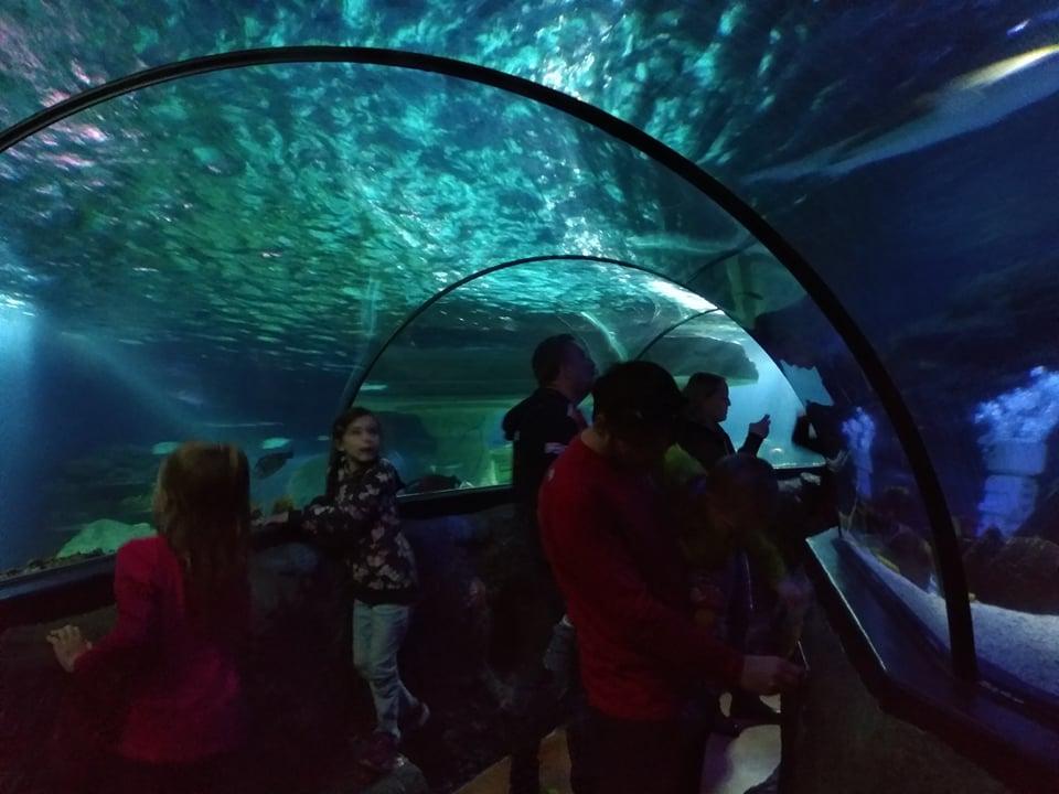 podmorsky svet v legolandu