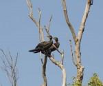 Přírodní rezervace Ropotamo