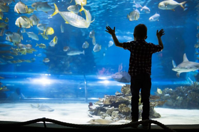 Akvárium v Cattolice