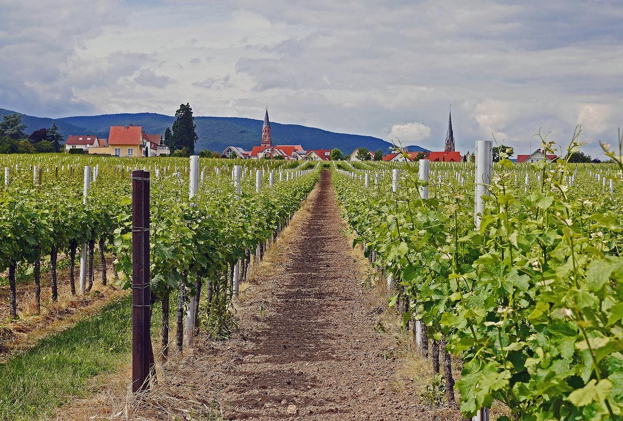 nemecka vinice