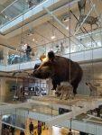 Muzeum přírodních věd Muse v italském Trentu