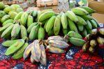 Africké trhy také v ČR