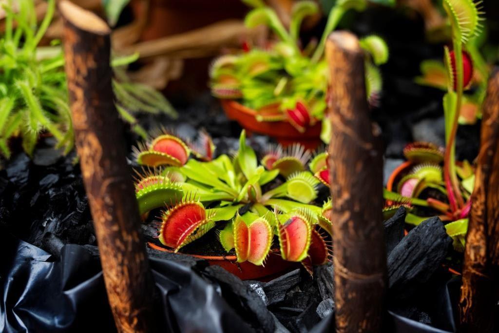 Smrtonosné pasti tropického skleníku Fata Morgana v Troji