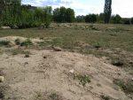Přírodní syslí rezervace v Mladé Boleslavi
